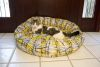 Iconic Pet - Donut Bed - Small