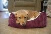 Iconic Pet - Luxury Lounge Pet Bed - Imperial Purple - Large