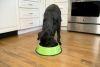 Iconic Pet - Color Splash Stripe Non-Skid Pet Bowl for Dog or Cat - Green - 96 oz