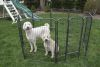 "Iconic Pet - Heavy Duty Metal TubePlaypen - 32"" Height"