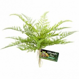 Zoo Med - Naturalistic Flora Lace Fern - Green