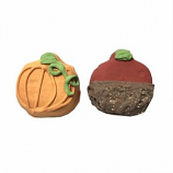 Bubba Rose Biscuit - Fall Cake Bites (Case of 12)