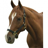 Horse And Livestock Prime - Premium Halter Chin With Snap - Black - Average