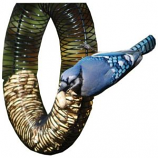 Songbird Essentials - Songbird Essentials Whole Peanut Wreath Feeder - Black - 13  Diameter