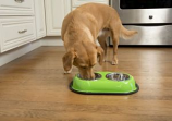 Color Splash Stainless Steel Double Diner (Green) for Dog/Cat - 1 Quart
