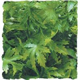 Zoo Med - Natural Bush Plants Cannabis - Green - Large/22 Inch